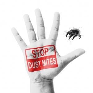 Stop Dust Mites
